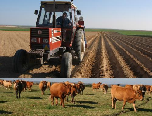 Una Feria Agropecuaria de Salamanca y para los profesionales del campo