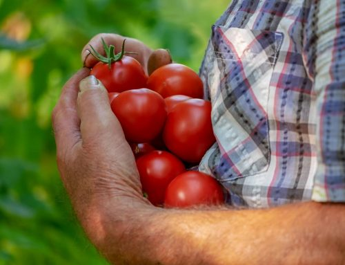 Ganemos pide dinamizar el mercado de frutas y verduras de San Justo