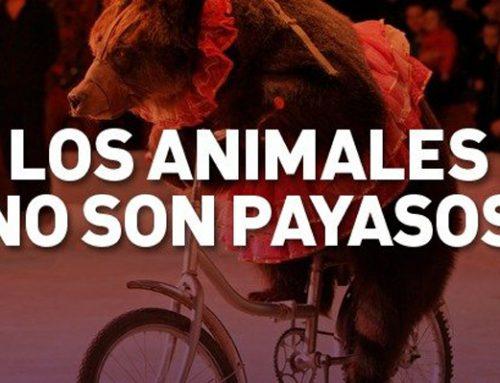 Libera! solicita el apoyo a los espectáculos circenses sin animales