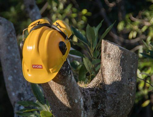 Ganemos en defensa del municipalismo y la creación de empleo forestal